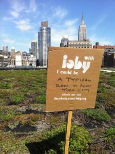 ِک سبزبام در نیویورک - بدون IOBY من یک سقف معمولی بودم