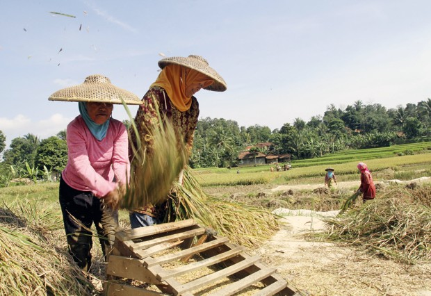 Indonesian farmers harvest rice at a field in Cibeuruem village, West Java, Indonesia, Saturday, Aug. 14, 2010.(AP Photo/Tatan Syuflana)